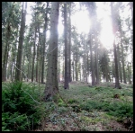 hürtgenwald 2